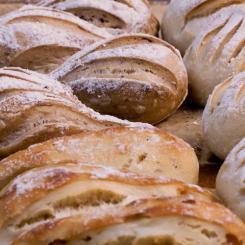 Minis pains spéciaux